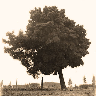 trees_sm